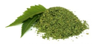 aceite de neem en ingles