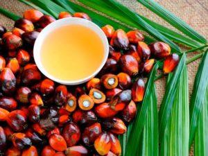 aceite de palma bueno o malo