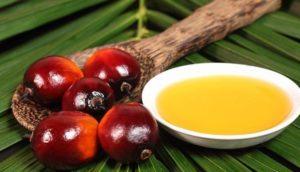 aceite de palma guatemala