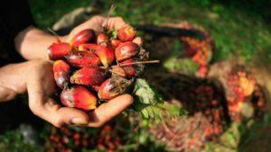 aceite de palma es malo
